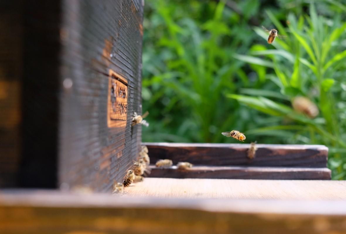 紀州梅香の日本蜜蜂